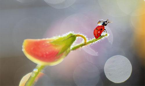 Käfer auf Blütenstengel